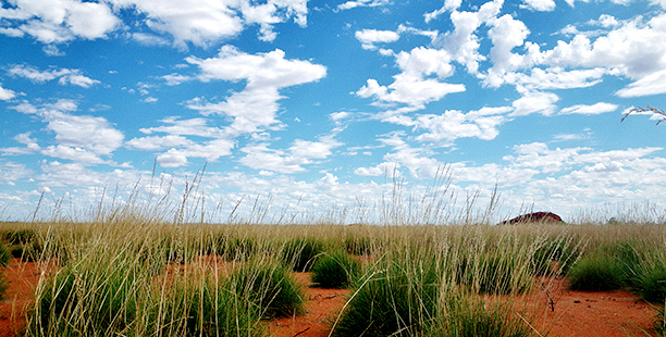 Flora and Vegetation Assessments & Surveys in the Pilabar and Gascoyne Murchison Areas of Western Australia Spinifex Landscape