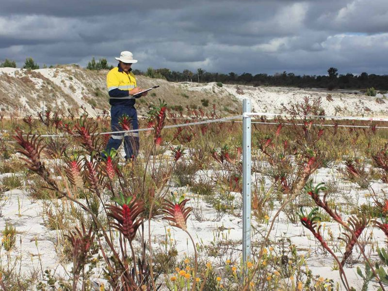 Hanson Construction Vegetation Flora Rehabilitation Monitoring Program Services Perth WA
