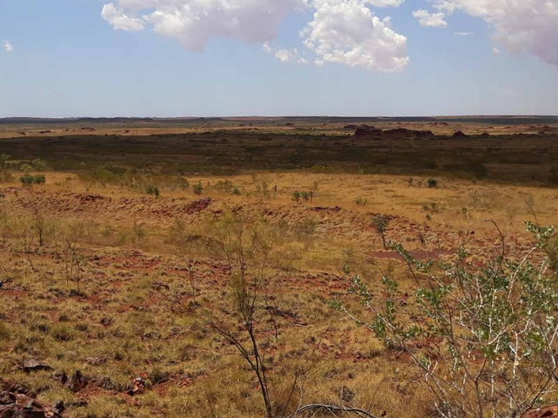 Mining Vegetation Flora Rehabilitation Monitoring Program Services Pilbara WA