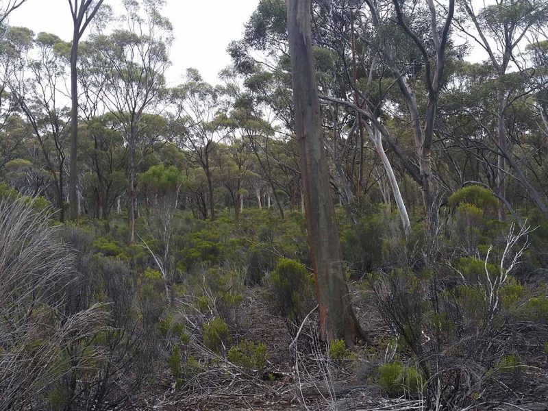 Barra Resources | Mt Thirsty Reconnaissance Flora and Fauna Assessment