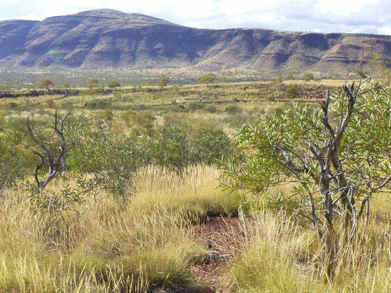 Restricted Vegetation Flora Community Survey Pilbara Gascoyne WA